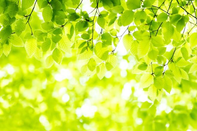 葉・新緑・初夏